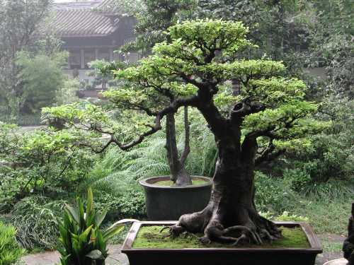 the-best-bonsai-caring-ways1